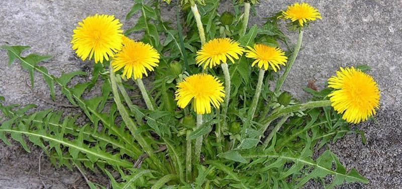 Viên Nang Nature Love Vitamin C Aus Bio Acerola 180 Viên-18